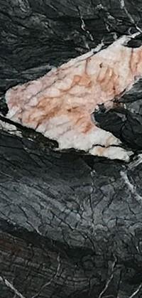 Crytos Quartzite Detail
